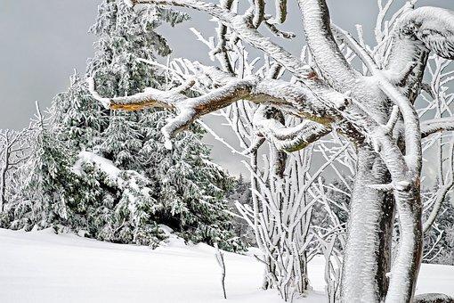 winter-1819926__340.jpg