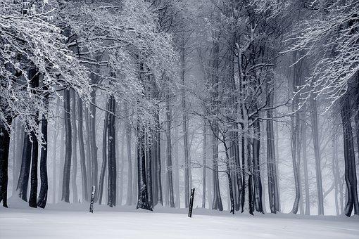 winter-1820987__340.jpg